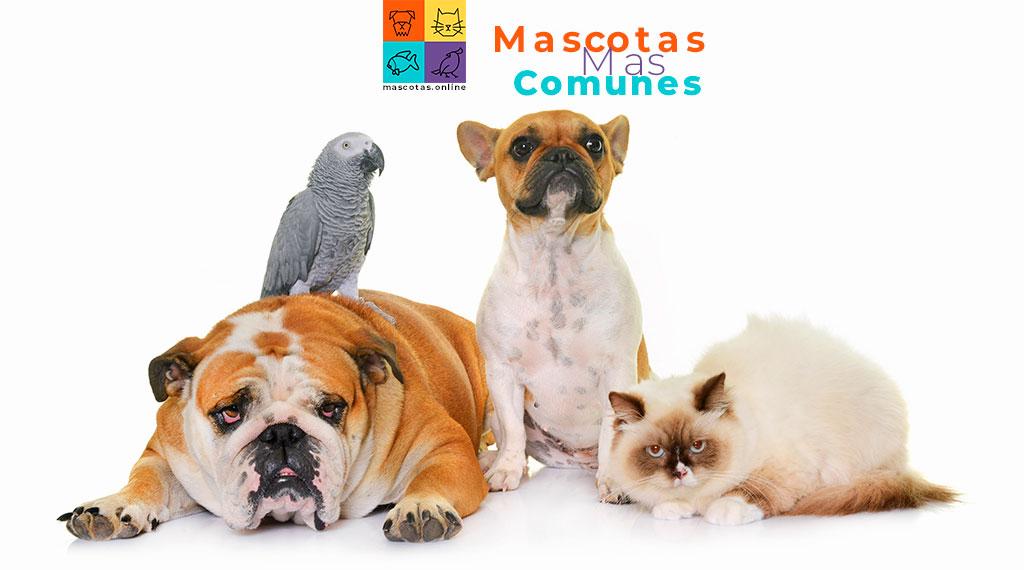 mascotas mas comunes en mexico