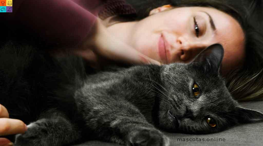 amor a los gatos