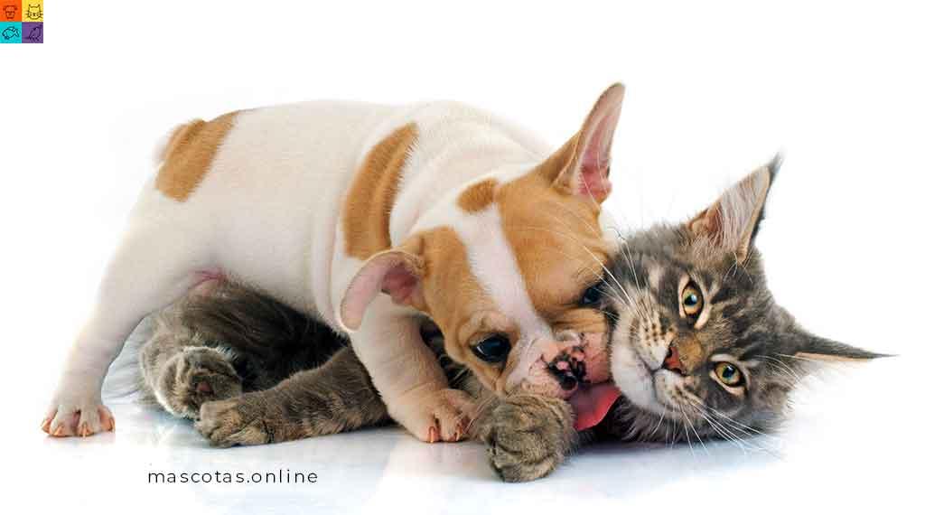perros y gatos las mascotas mas comunes