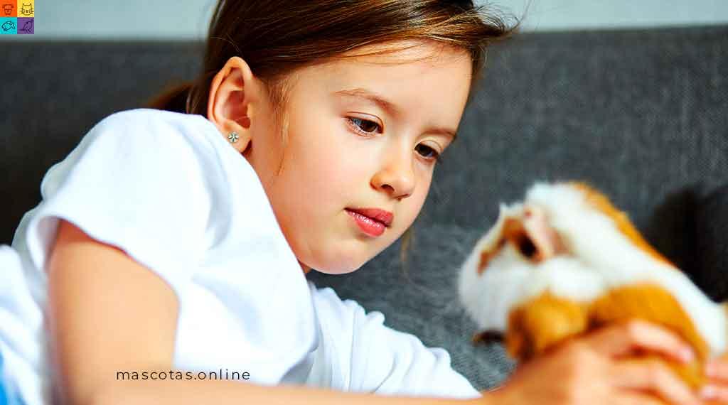 los hamster mascotas mas populares en mexico