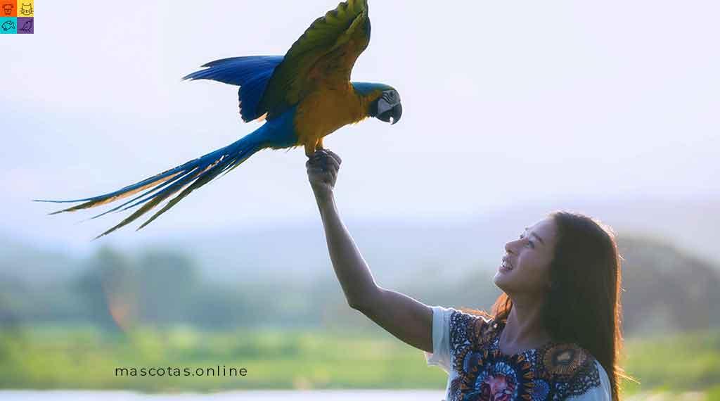 Aves mascotas populares en mexico
