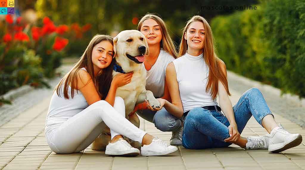 perro labrador con chicas